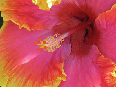 Photograph - Hawaiian Hibiscus - Orange And Red 06 by Pamela Critchlow