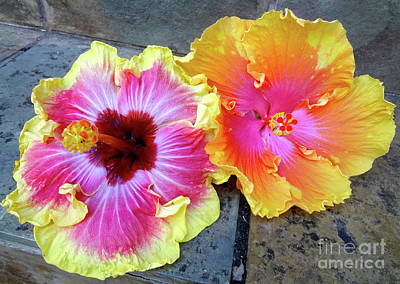 Painting - Hawaiian Hybrid Hibiscus by Jenny Lee