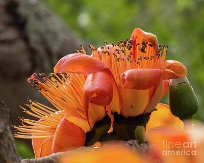 Photograph - Hawaiian Orange Flower 2 by Christy Garavetto