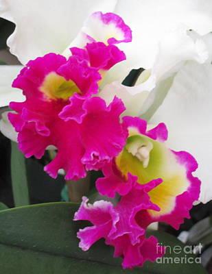 Hawaiian Orchid 10 Art Print