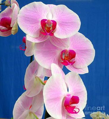 Hawaiian Orchid 12 Art Print