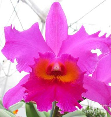Hawaiian Orchid 16 Art Print