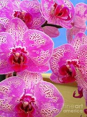 Hawaiian Orchid 27 Art Print
