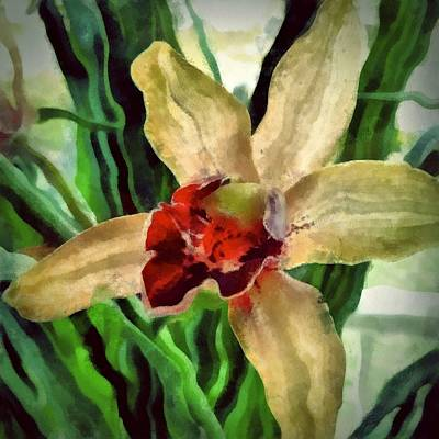 Digital Art - Hawaiian Orchid by Patricia Strand