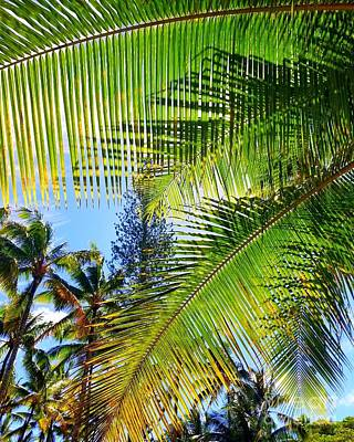 Photograph - Hawaiian Palm by Kristine Merc
