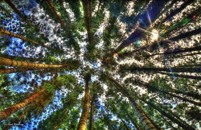 Photograph - Hawaiian Perspective Cook Pine Trees Oahu Hawaii Art by Reid Callaway