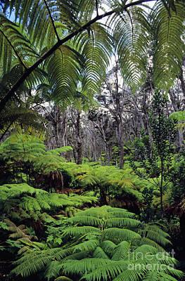 Hapuu Photograph - Hawaiian Rainforest by Greg Vaughn - Printscapes