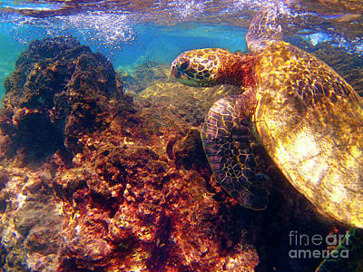 Hawaiian Green Sea Turtle Photograph - Hawaiian Sea Turtle - On The Reef by Bette Phelan