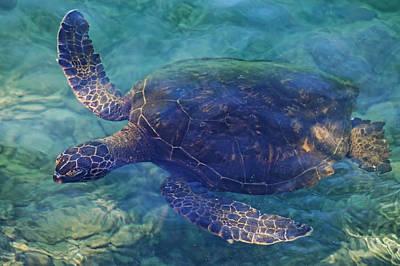 Photograph - Hawaiian Sea Turtle by Pamela Walton