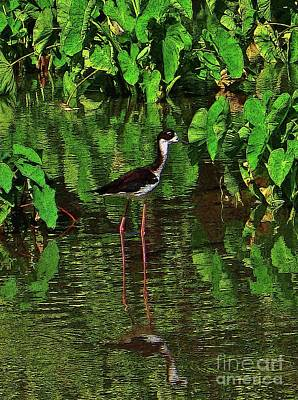 Photograph - Hawaiian Stilt In The Kalo by Craig Wood
