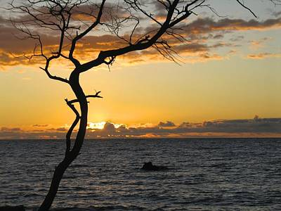 Wall Art - Photograph - Hawaiian Sunset by Lucy Moorman