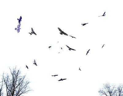 Photograph - Hawk And Crow Dance by Lizi Beard-Ward