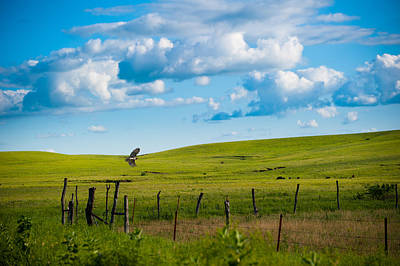 Photograph - Hawk And Flint Hills by Jeff Phillippi
