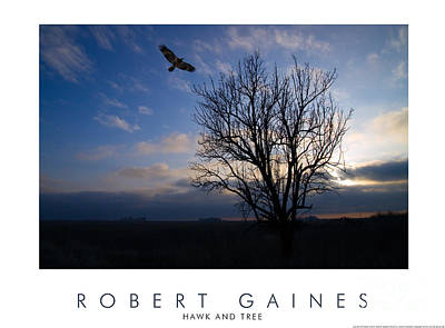 Photograph - Hawk And Tree At Sunset Color by Robert Gaines