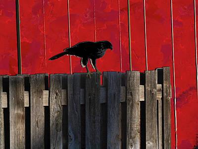 Hawks Mixed Media - Hawk by Don Gradner