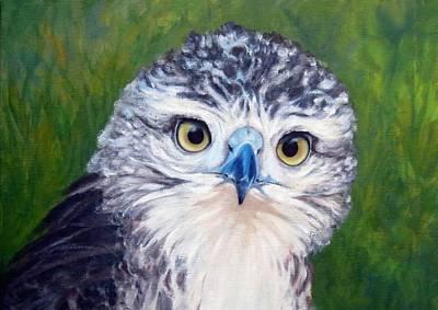 Wall Art - Painting - Hawk Eye by Vicki Van Vynckt