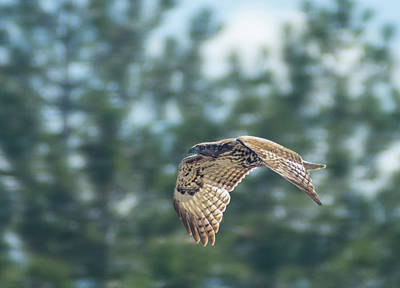 Photograph - Hawk In Flight by Rick Mosher