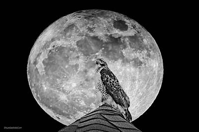 Photograph - Hawk In The Super Moon by LeeAnn McLaneGoetz McLaneGoetzStudioLLCcom