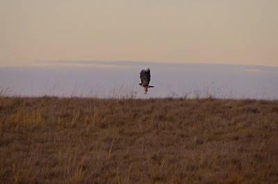 Photograph - Hawk Landing by Toni Berry