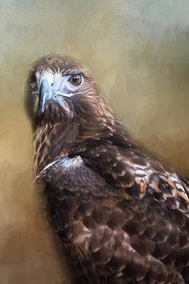 Photograph - Hawk by Michele Wright