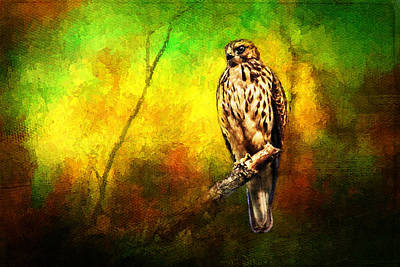 Hawk On Branch Art Print