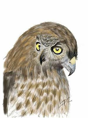 Digital Art - Hawk Owl by Darren Cannell