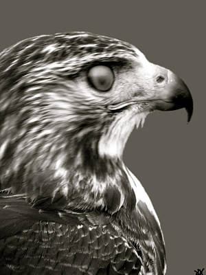 Photograph - Hawk Profile by Debra     Vatalaro
