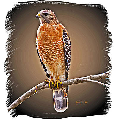 Photograph - Hawk  by T Guy Spencer