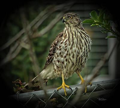 Photograph - Hawk Watch by Bill Posner