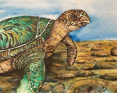 Hawkbilled Sea Turtle Art Print
