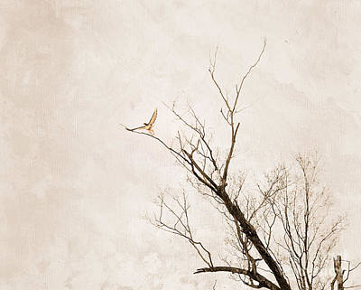 Photograph - Hawk's Embrace by Sandra Silva