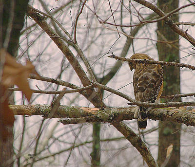 Photograph - Branch Manager by Dennis Baswell