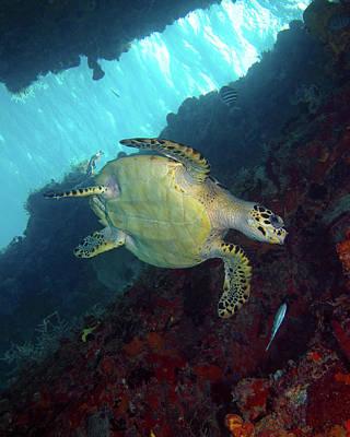 Photograph - Hawksbill Sea Turtle 8 by Pauline Walsh Jacobson