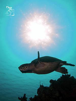 Photograph - Hawksbill Turtle by Mauricio Riquelme