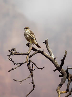 Photograph - Hawkwatch by Ryan Seek