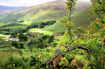 Photograph - Hawthorn Branch With View To Wicklow Hills. Ireland by Jenny Rainbow