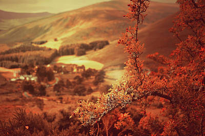 Photograph - Hawthorn Branch With View To Wicklow Hills. Ireland. Toned by Jenny Rainbow
