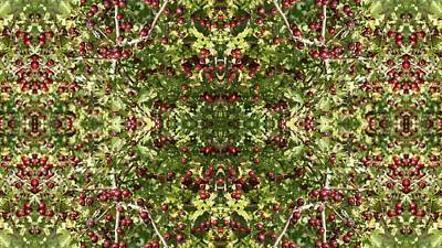 Photograph - Hawthorn Photo A Fractal by Julia Woodman