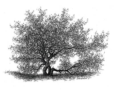 Hawthorne In The Spring Print by Steven Hawkes
