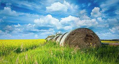 Photograph - Hay And Canola Under A Summer Sky by Philip Rispin