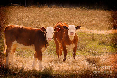 Photograph - Hay Babies - Cow Art #566 by Ella Kaye Dickey