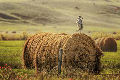 Photograph - Hay Bale Surfer by Susan Rissi Tregoning