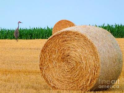 Cornfield Photograph - Hay Bale With Crane by Michael Garyet