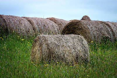 Hay Bales Among The Wildflowrs Art Print by Donna Lee