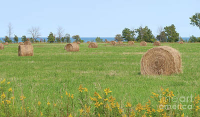 Photograph - Hay Bales And Goldenrod by Ann Horn