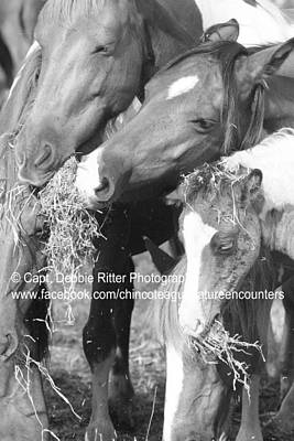 Photograph - Hay by Captain Debbie Ritter