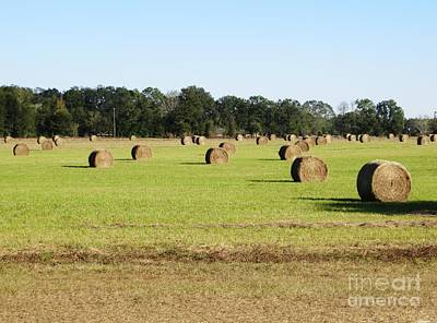 Photograph - Hay Day by Tim Townsend