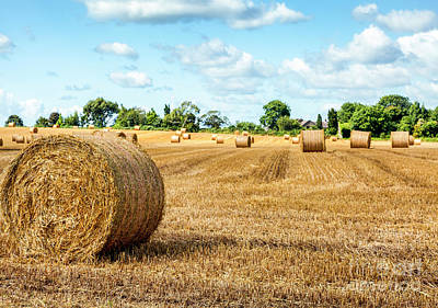 Photograph - Hay Field by Jim Orr