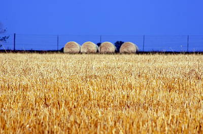 Photograph - Hay Hay by Debi Demetrion