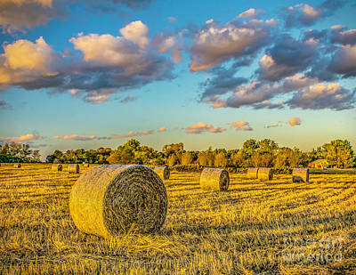 Photograph - Hay In The Field by Nick Zelinsky